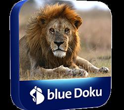 PS_blue_Doku_250x250px_shad